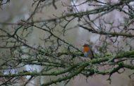 Take Part in this Year's Big Garden Birdwatch