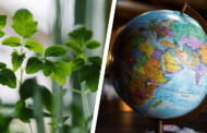 World Environment Day: What can be done locally?