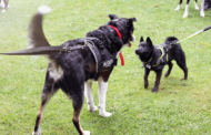 RSPCA plan 'Beaumont Barks' dog show for Bank Holiday Monday